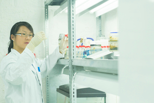 Female scientist looking at test tube plant samples in labの写真素材 [FYI03523843]