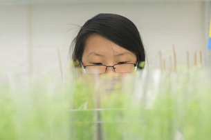 Close up of female scientist looking at plant sample in  greenhouse labの写真素材 [FYI03523845]