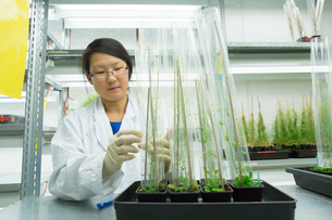 Female scientist looking at plant sample in  greenhouse labの写真素材 [FYI03523846]