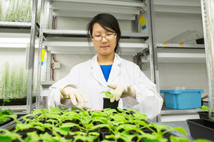Female scientist selecting plant sample in  greenhouse labの写真素材 [FYI03523847]