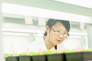 Female scientist looking at plant sample in  greenhouse labの写真素材 [FYI03523850]