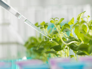 Close up of pipetting experimental chemical into laboratory seedling trayの写真素材 [FYI03524612]