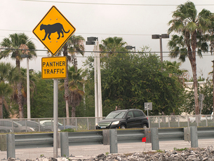 Panther crossing warning sign along a roadway, Naples, Florida, USAの写真素材 [FYI03526017]