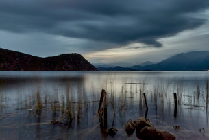 Tranquil view of silhouetted reeds on Lugu Lake at dusk, Yunnan, Chinaの写真素材 [FYI03526409]