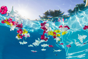 Underwater view of flower petals floating in swimming poolの写真素材 [FYI03526732]