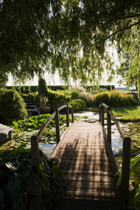 Weeping willow and wooden footbridge over lily pond in garden at sunsetの写真素材 [FYI03526948]