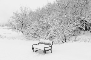 Snow covered trees and park bench, Reykjavik, Icelandの写真素材 [FYI03527042]