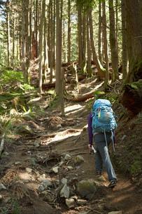 Female backpacker hiking in woodsの写真素材 [FYI03528184]