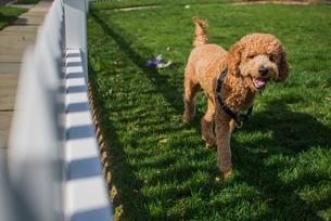 Portrait of curious dog in gardenの写真素材 [FYI03528453]