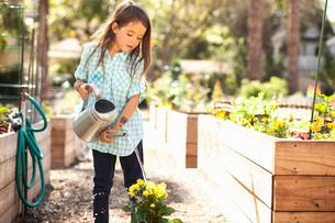Girl watering flower plant in community gardenの写真素材 [FYI03528611]