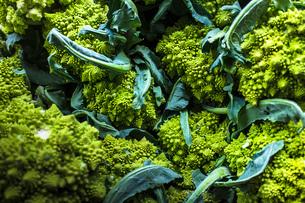 Romanesco broccoliの写真素材 [FYI03529826]