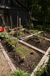 Organic flower and vegetable garden plots next to barn in rustic backyard garden in spring seasonの写真素材 [FYI03530096]