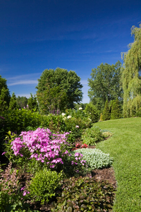Garden lawn with border of various plants, shrubs and flowers including pink phlox carolina 'Bill Baの写真素材 [FYI03530103]