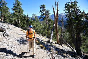 Couple hiking, Mount Charleston Wilderness trail, Nevada, USAの写真素材 [FYI03530269]