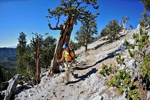 Young woman hiking, Mount Charleston Wilderness trail, Nevada, USAの写真素材 [FYI03530279]