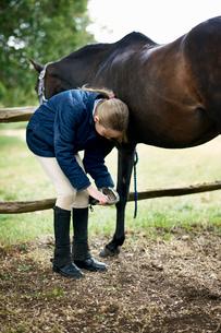 Girl checking horses hoofの写真素材 [FYI03531416]