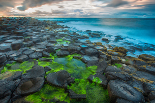 High angle view of moss covered Giants Causeway and blue ocean, Bushmills, County Antrim, Ireland, Uの写真素材 [FYI03531924]