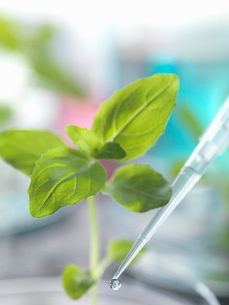 Pipette dropping test sample onto seedling in petri dishの写真素材 [FYI03533284]
