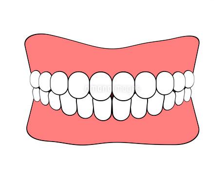 歯のイラスト素材 [FYI03533714]