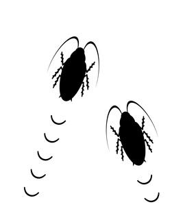 二匹のゴキブリのイラスト素材 [FYI03534773]