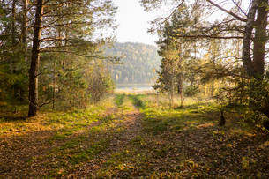 Pathway through forest, Ural, Russiaの写真素材 [FYI03535785]