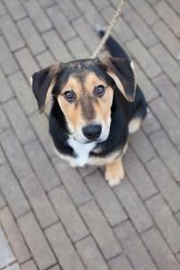 Overhead portrait of dog on sidewalkの写真素材 [FYI03537033]