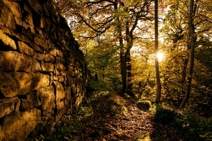 Dry stone wall and sunlight through trees in forest, Padley Gorge, Peak District, Derbyshire, Englanの写真素材 [FYI03537213]