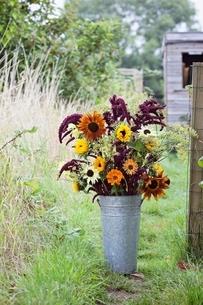 Flower bouquet in bucket at garden allotmentの写真素材 [FYI03537989]