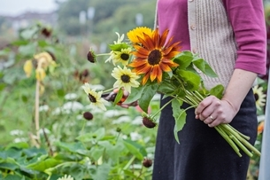 Cropped view of woman cutting fresh flowers at allotmentの写真素材 [FYI03537993]