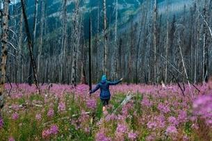 Rear view of mid adult woman balancing on fallen tree in field of wildflowers, Moraine lake, Banff Nの写真素材 [FYI03538206]