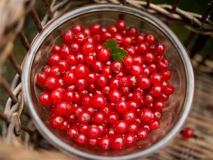 Overhead view of bowl of redcurrants in wicker basketの写真素材 [FYI03540423]