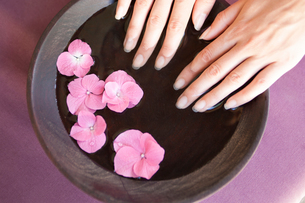 Young woman's fingernails soaking in bowl of pink flower petal water at spaの写真素材 [FYI03543084]