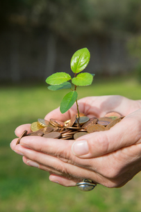 Side view of womans cupped hands holding tree seedling growing from coinsの写真素材 [FYI03543118]