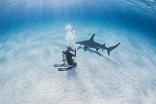Diver taking photograph of Great Hammerhead Sharkの写真素材 [FYI03543516]