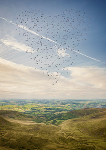 Heart shaped flock of birds flying above the Brecon Beacons, Wales, UKの写真素材 [FYI03545720]