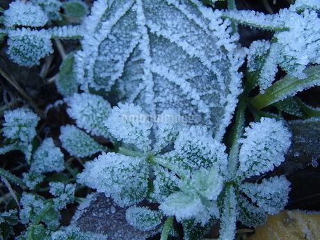 霜の花の写真素材 [FYI03545824]