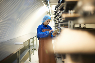 Female worker updating digital tablet whilst preparing stack of seed trays in underground tunnel nurの写真素材 [FYI03545856]