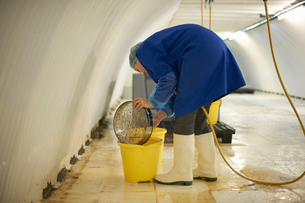 Female worker cleaning equipment in underground tunnel nursery, London, UKの写真素材 [FYI03545857]