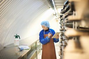 Female worker updating digital tablet in underground tunnel seed tray nursery, London, UKの写真素材 [FYI03545861]