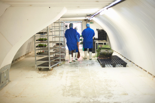 Rear view of workers in underground tunnel seed tray nursery, London, UKの写真素材 [FYI03545862]