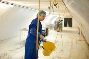 Female worker cleaning equipment in underground tunnel nursery, London, UKの写真素材 [FYI03545863]