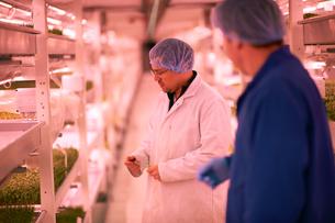 Workers talking in micro green underground tunnel nursery, London, UKの写真素材 [FYI03545864]