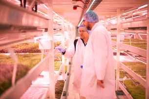Workers discussing micro greens in underground tunnel nursery, London, UKの写真素材 [FYI03545869]