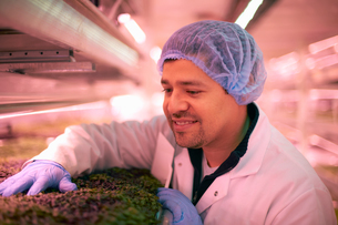 Worker wearing hair net checking vegetables growing in artificial light smilingの写真素材 [FYI03545901]