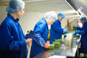 Workers on production line wearing hair nets packaging vegetablesの写真素材 [FYI03545919]