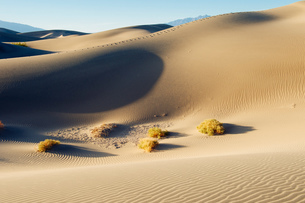 Desert grass and sand dunes, Death Valley, California, USAの写真素材 [FYI03547341]