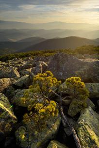 Gorgany Mountain Ridge, views from Sinyak mountain, Carpathian Mountains, Ivano-Frankovsk Region, Ukの写真素材 [FYI03548619]