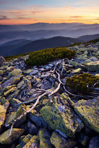 Gorgany Mountain Ridge, views from Sinyak mountain, Carpathian Mountains, Ivano-Frankovsk Region, Ukの写真素材 [FYI03548620]