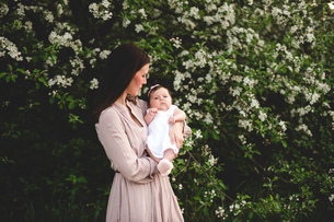 Portrait of baby girl in mothers arms by garden apple blossomの写真素材 [FYI03550753]