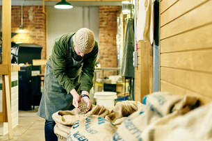 Male coffee shop owner checking raw coffee beans in store roomの写真素材 [FYI03551254]